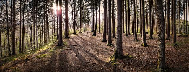 Bannwald 5 2021 explored