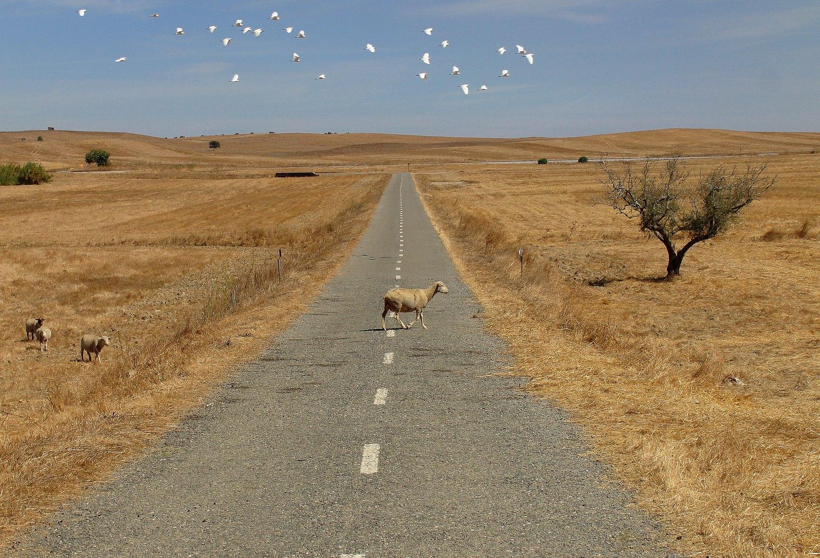 «A Estrada para o Fim do Mundo», Casével (Marteen van der Velden, 2010)