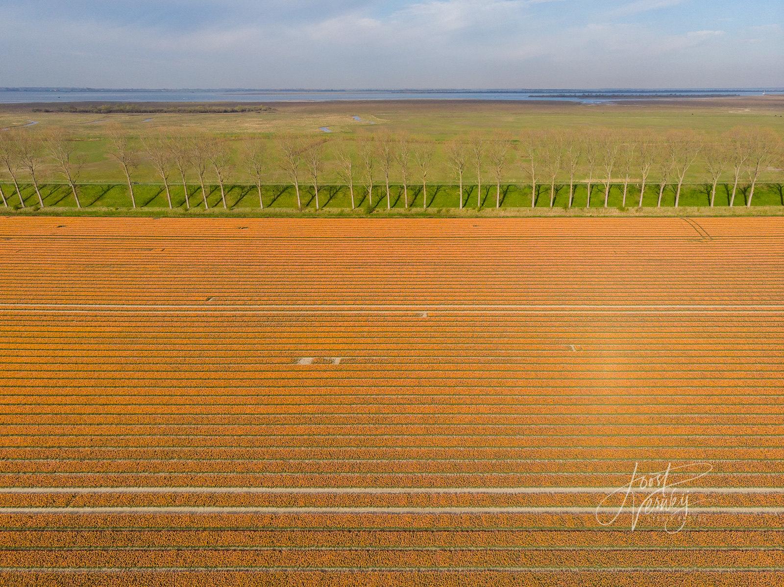Landscape Layers #1