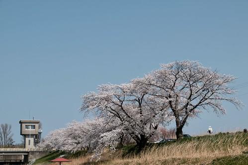 Sakura memories 2021 6