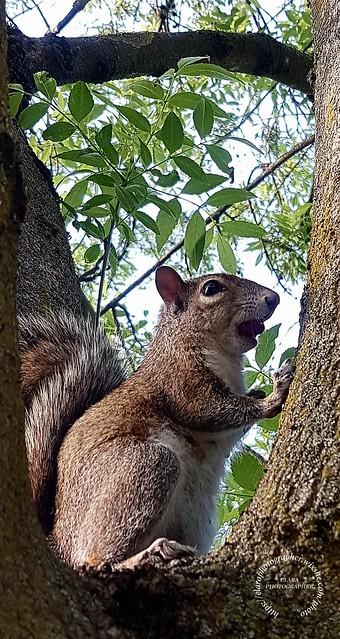 Squirrel .Parco delle Cave Milan