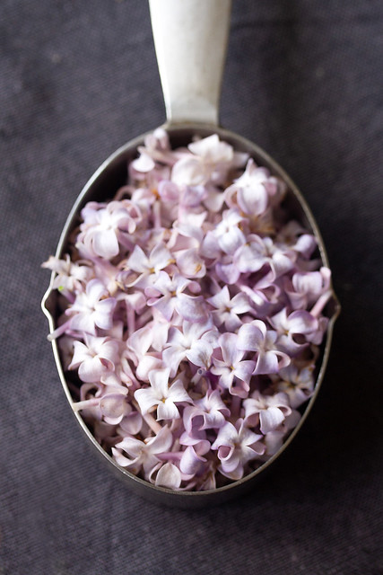 Measuring Cup of Lilac Blossoms