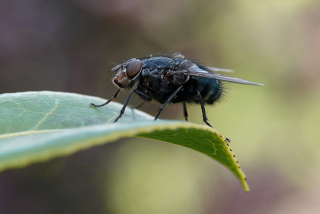 365 - Image 127 - Fly...