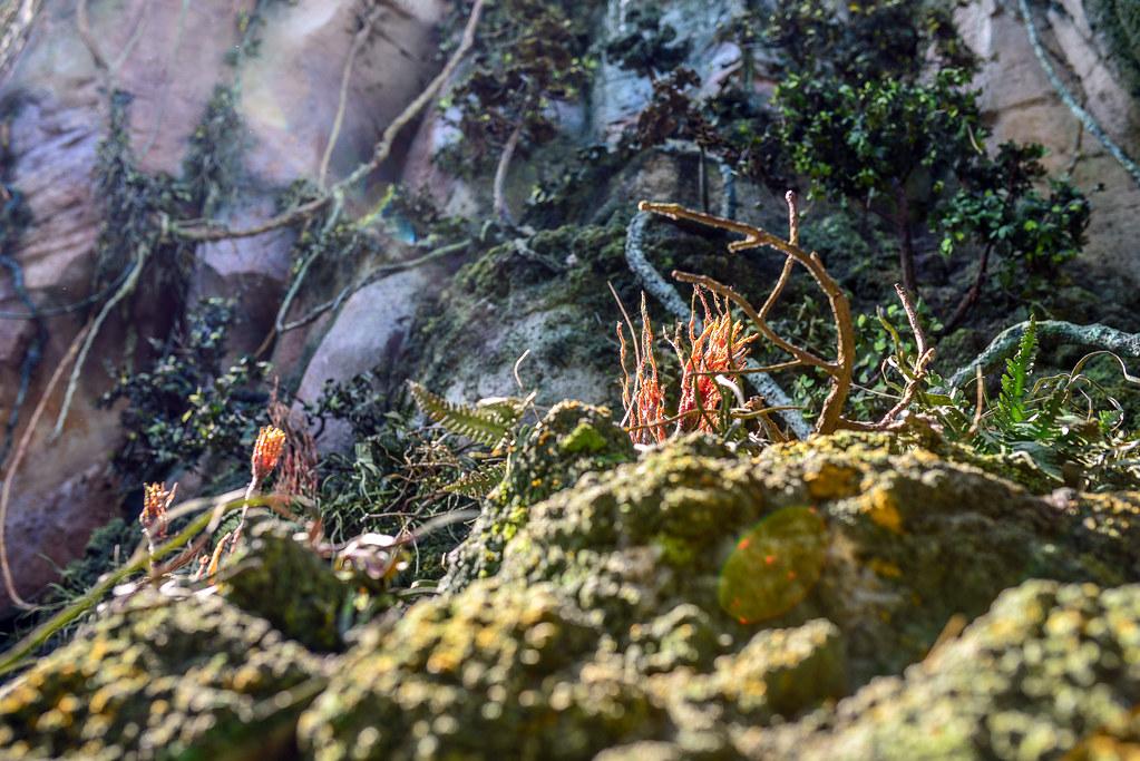 Pandora sun spots AK
