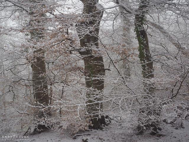 Three were hidden by winters veil