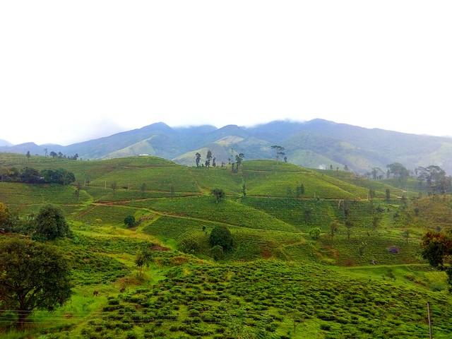 Kalebokka tea state,  Sri Lanka
