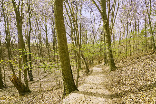 029015a- Shades Of Spring In Saugatuck State Park