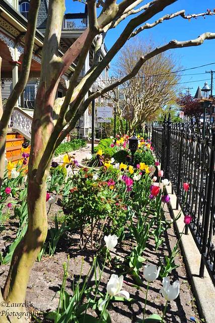 Twenty tulips (HFF!)