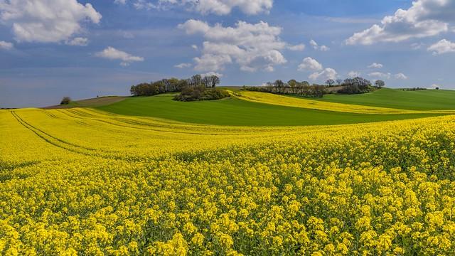 *Spring in the Pellenz II*