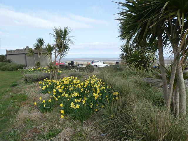 Fleetwood - Euston Park [Daffodils] 210401