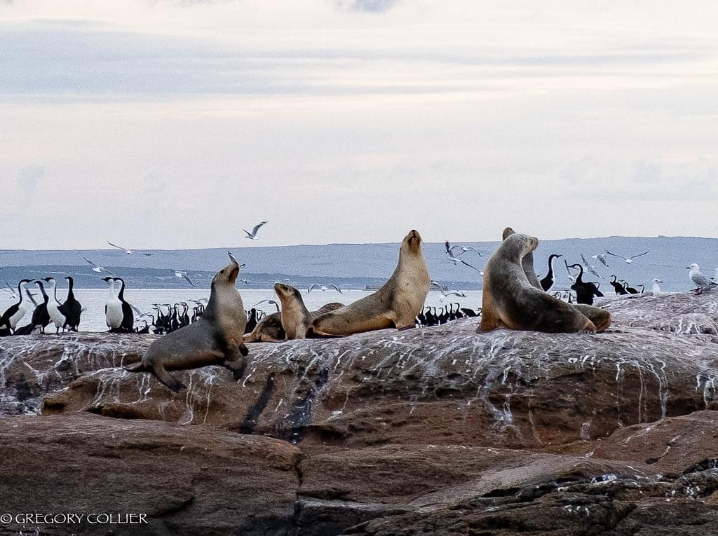 Birds and sea lions.jpg