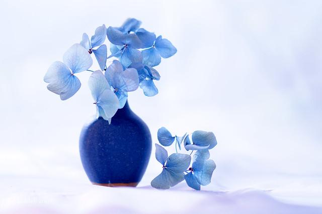 Gently blue