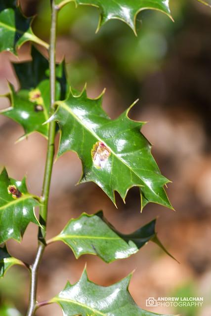 Nature Photo walk - Whippendell Woods