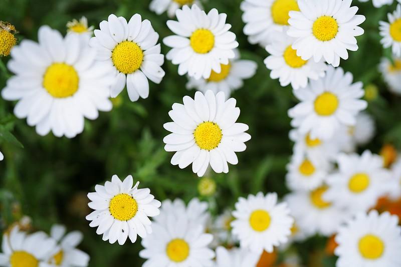 Flower(SONY FE 50mm F2.8 Macro)