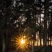 Sun Burst in the Woods