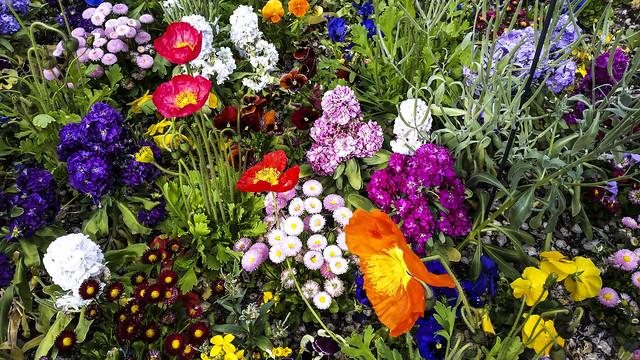 Merano (Italy): Sissy's gardens -  IMG20210507gr