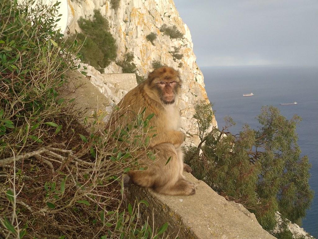 Monkey Talk Gibraltar