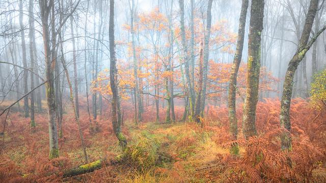 Autumn Vibrance, Scotland