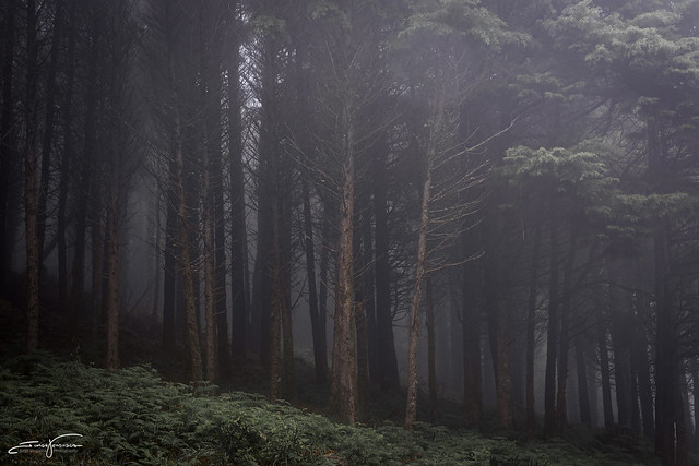 Forest…