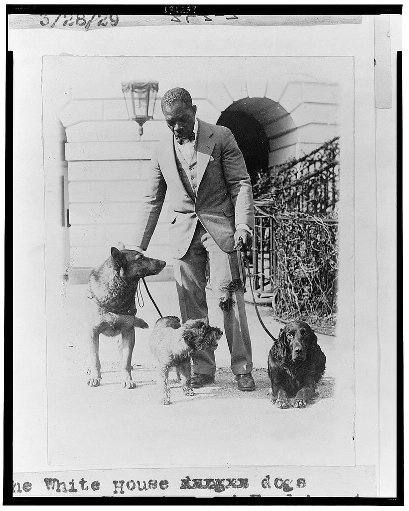 The White House dogs King Tut, Whoopie, and Englehurst Gillette (LOC)