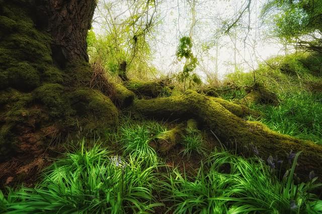 Mossy wood (explored)