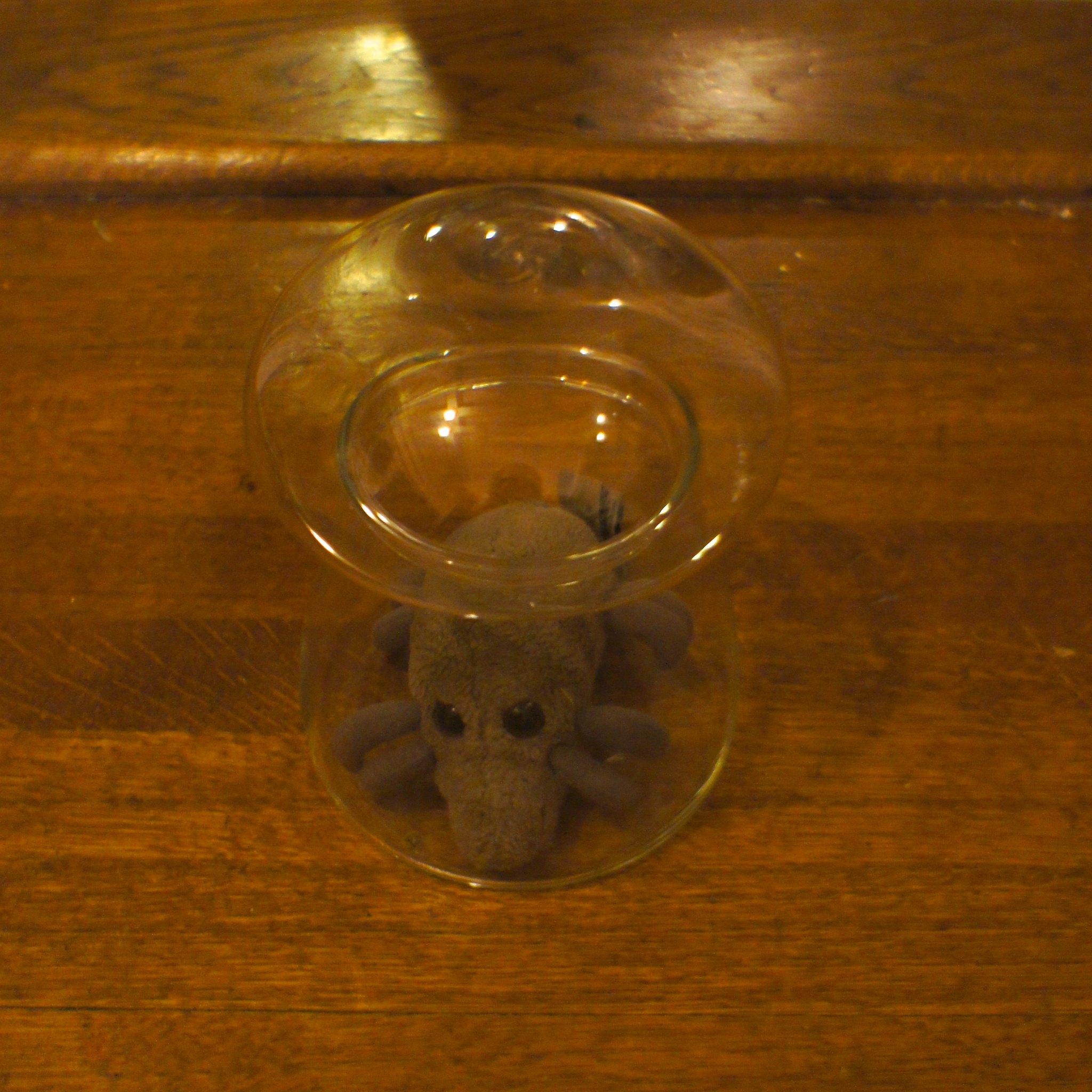 Mite under glass
