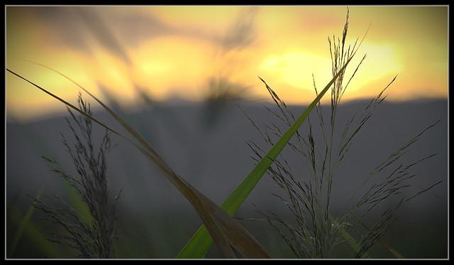 Gras Morgens