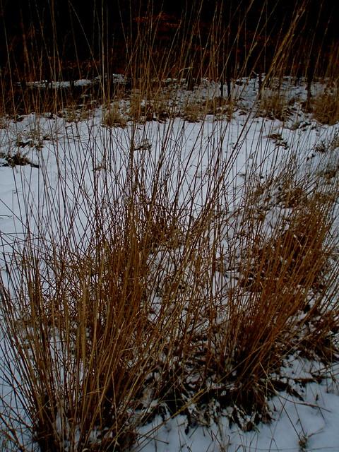 2009-02-14 Sopot - spacer na Bukową Polanę (31)