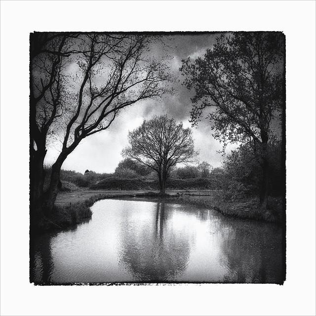 3 Trees Noir