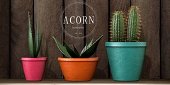 ACORN Cactus Pot Trio