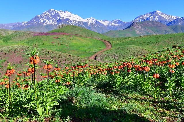 Kurdistan Welate min Avîna min