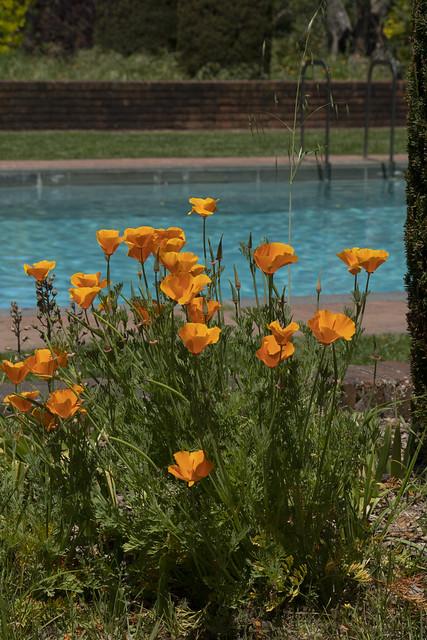 Springtime California style