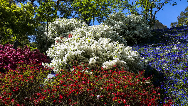 Merano (Italy): Sissy's gardens - IMG20210508gr
