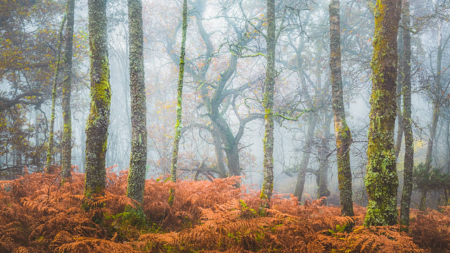 The Forest Performer. Loch Lomond and the Trossachs National Park, Scotland
