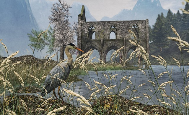The heron and the lost abbey