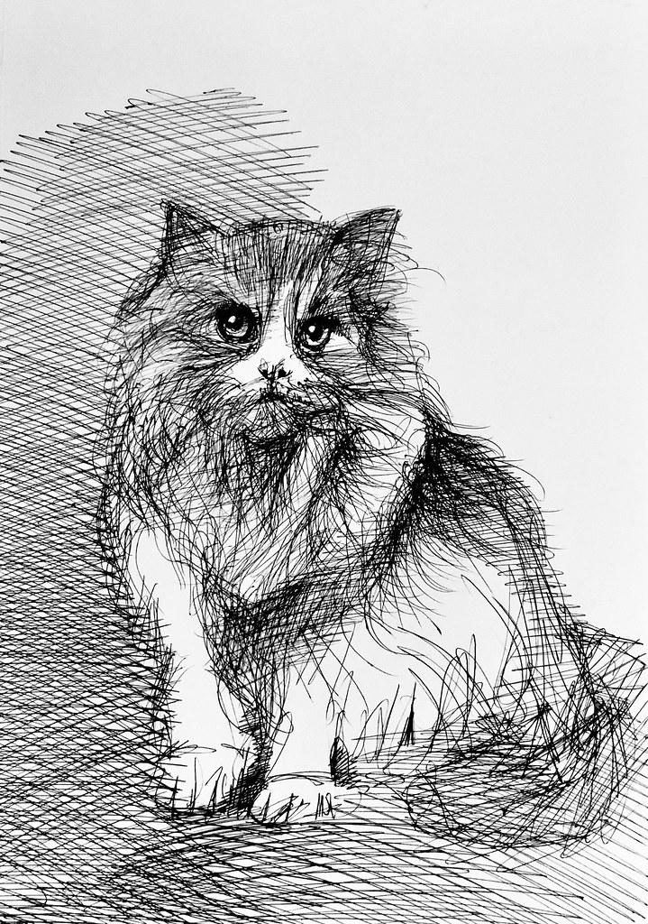 Jenkins best friend. Ballpoint pen only drawing by jmsw on card.