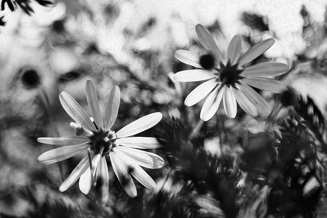 Painting daisies in monochrome - Pintando margaritas en monocromo