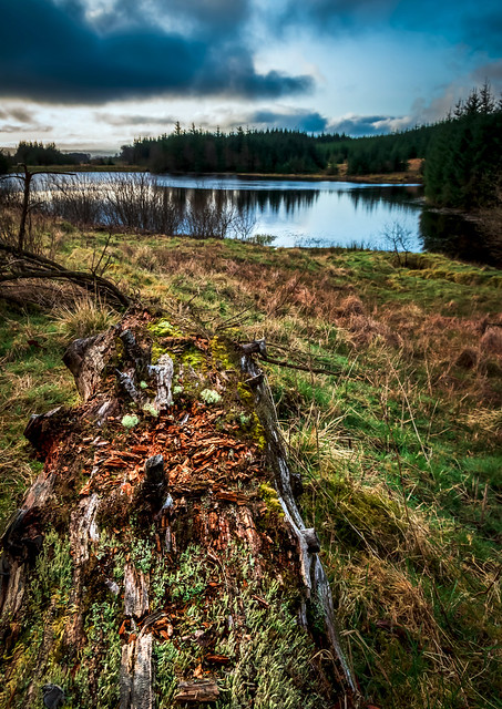 Decomposing log, Ladymuir Reservoir, Locherwood and Lady Muir Woodland, Renfrewshire, Scotland, UK
