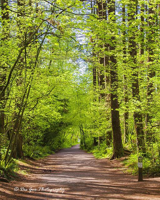 Cedar Trail, Green Timbers Urban Forest Park, Surrey BC