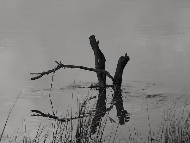 Nature morte..still life