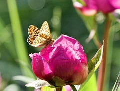 Serie mariposas y naturaleza