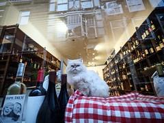 Hello @lord_socrates ! #raamkat #RaamkattenVanDenHaag #cats #CatsOfInstagram