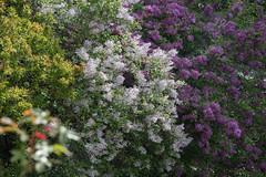 Botanischer Garten lu00e4dt ein-bw_20210508_6301.jpg