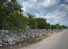 Sacalum, Yucatan, Mexico