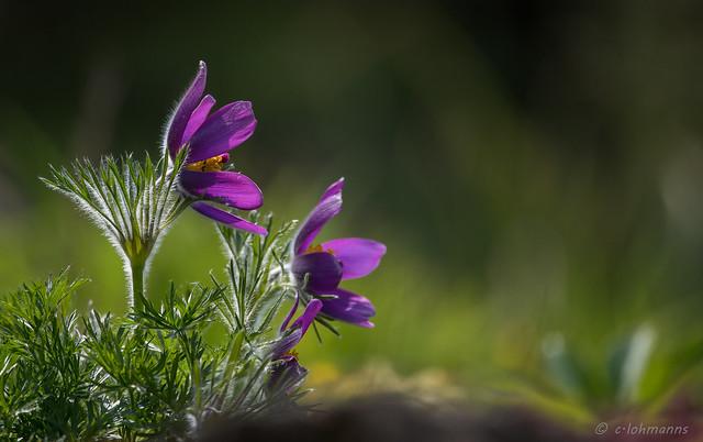 es ist Frühling ...............