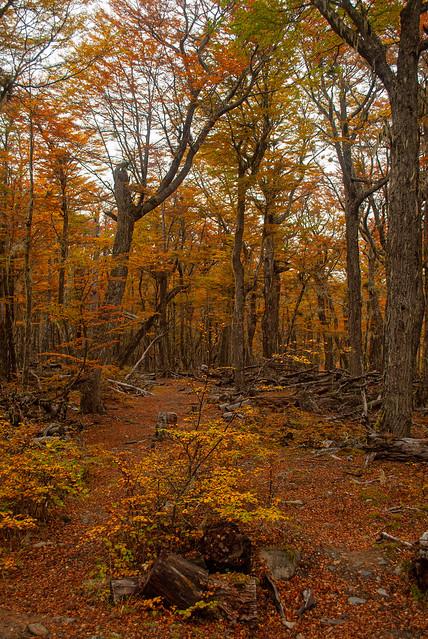 En el bosque encantado, de mi hermoso país