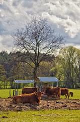 Country Life / Landleben