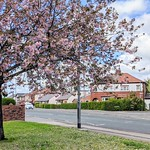 Spring blossom around Preston