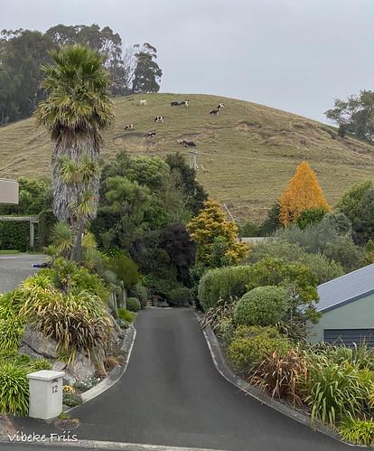 myview raincoming nelson newzealand