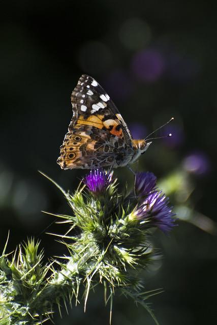 Ya vuelan las primeras mariposas por los campos.
